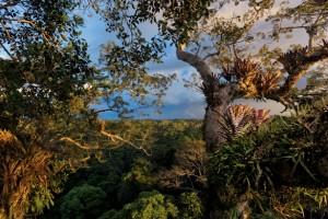 Superkančios mišką bendrovės